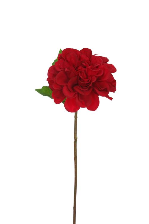 single dahlia red