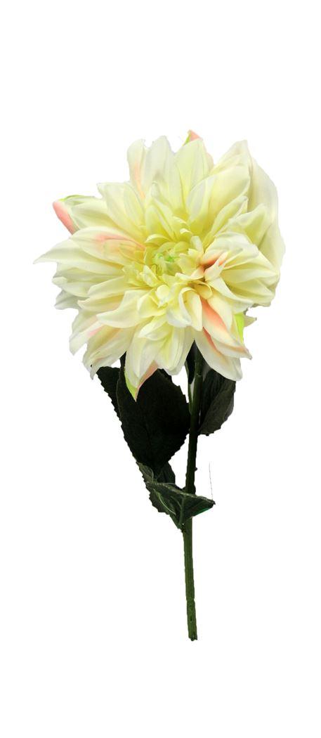 single dahlia white