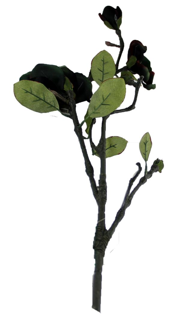 single magnolia light green