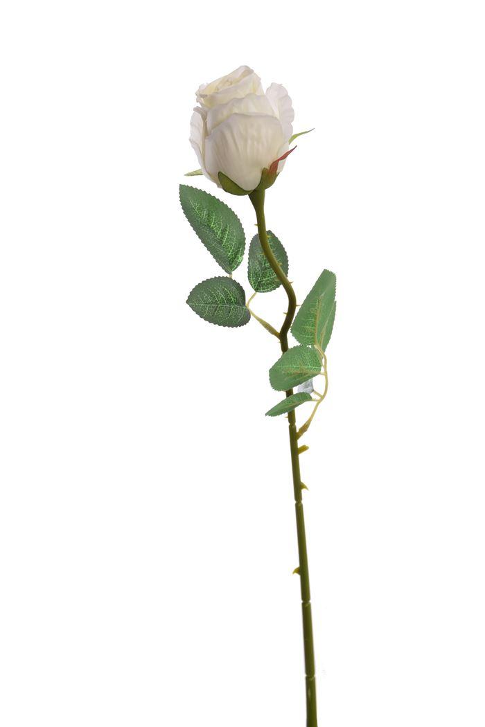 single rose bud cream