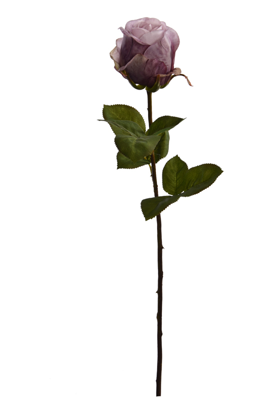 single rose bud lavender