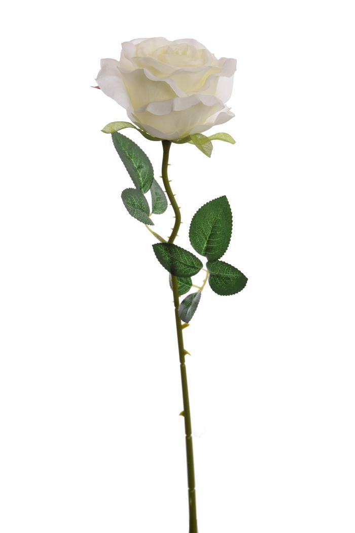 single rose cream