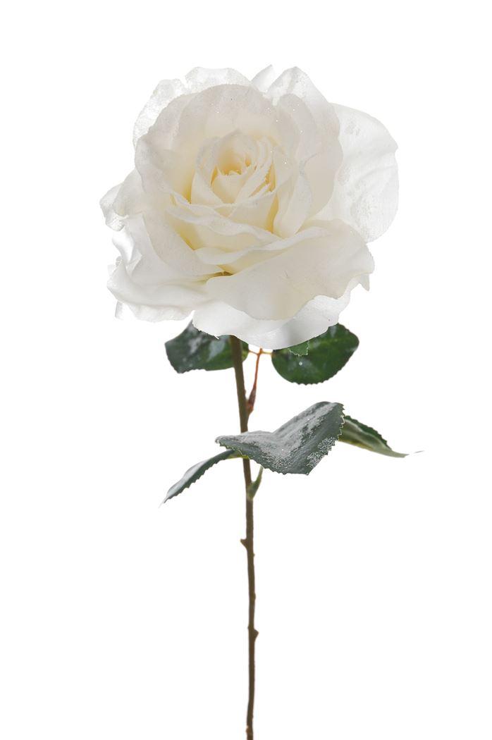 single rose with ice cream