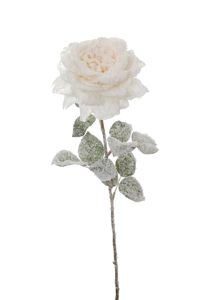 single rose w/snow cream