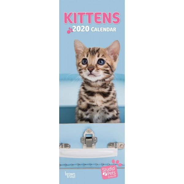 slimline kalender 2020 kittens studio pets