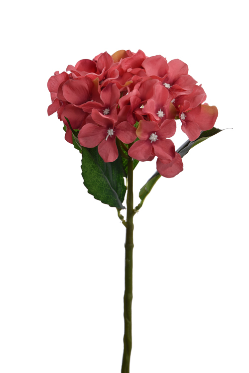 small hydrangea pink