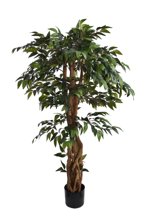 smilax tree with 1152 leaves in pot green