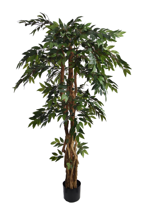 smilax tree with 1536 leaves in pot green