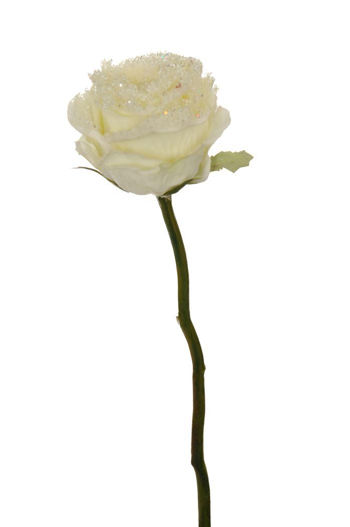 snow line rose cream