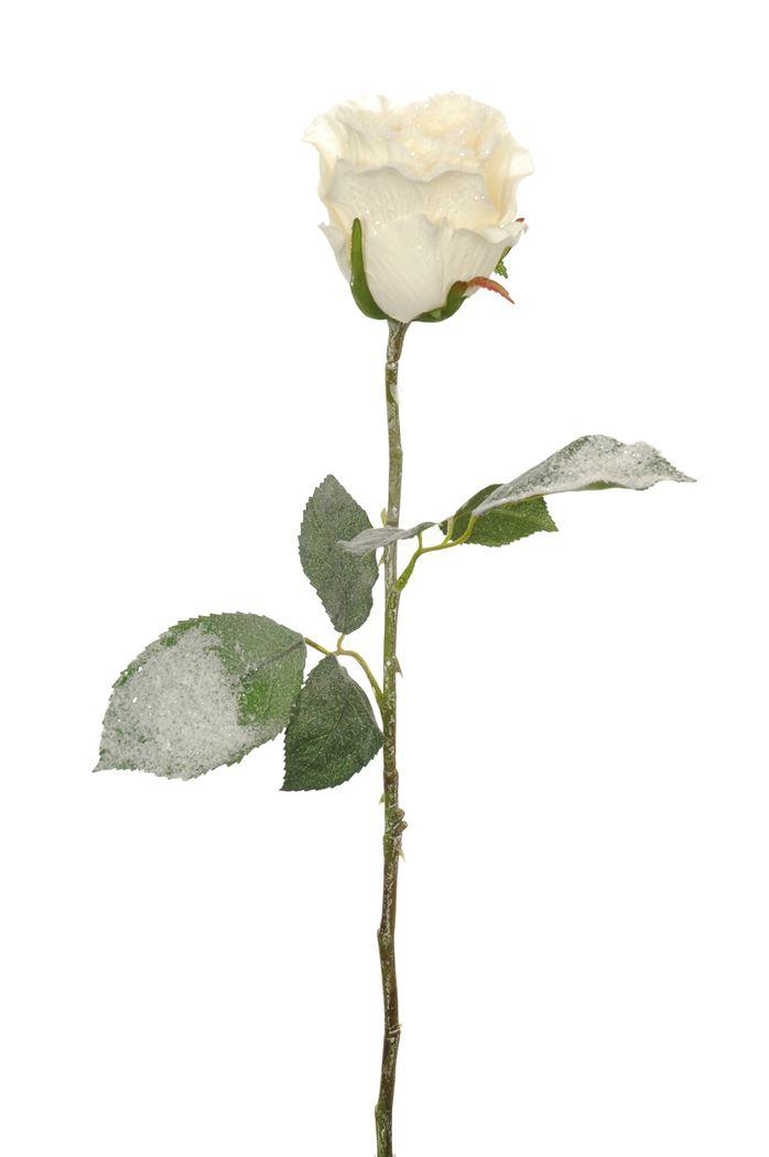 snowy single rose bud cream