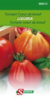 somers tomaat coeur de boeuf liguria