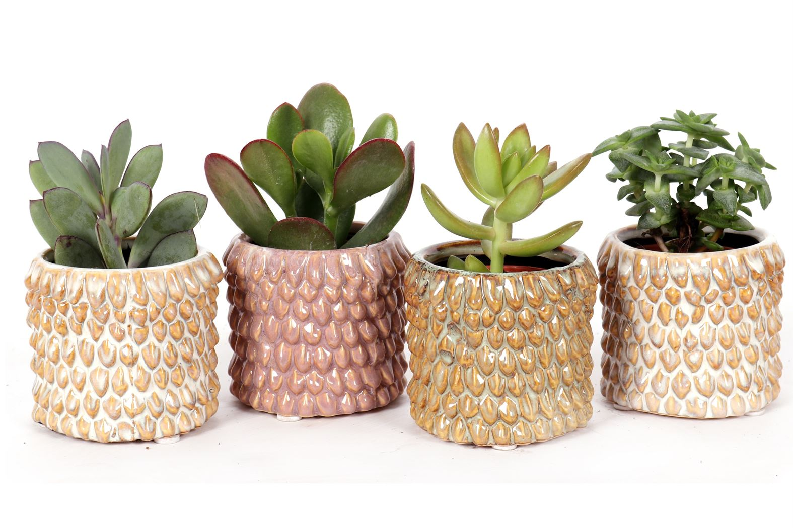 succulent gemengd in casablanca keramiek