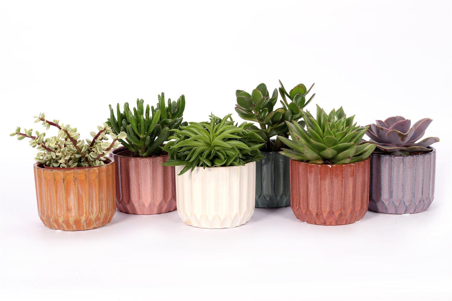 succulenten gemengd in avignon keramiek