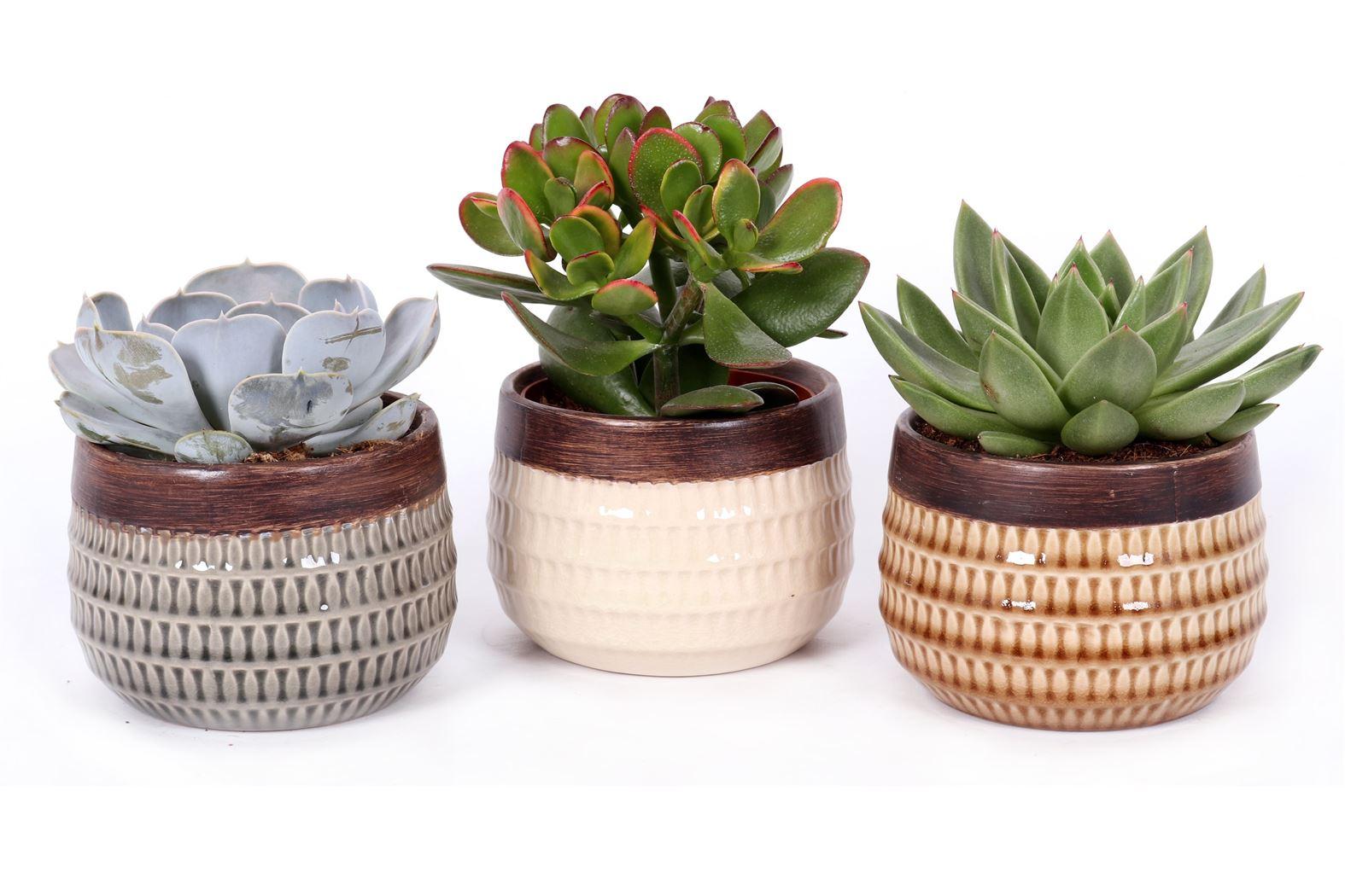 succulenten gemengd in cairo keramiek
