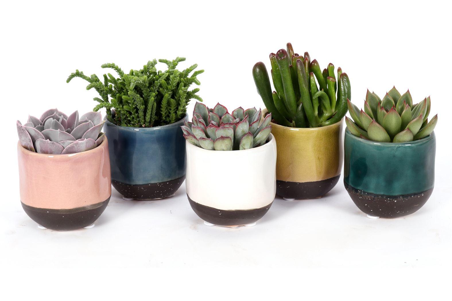 succulenten gemengd in elzas keramiek