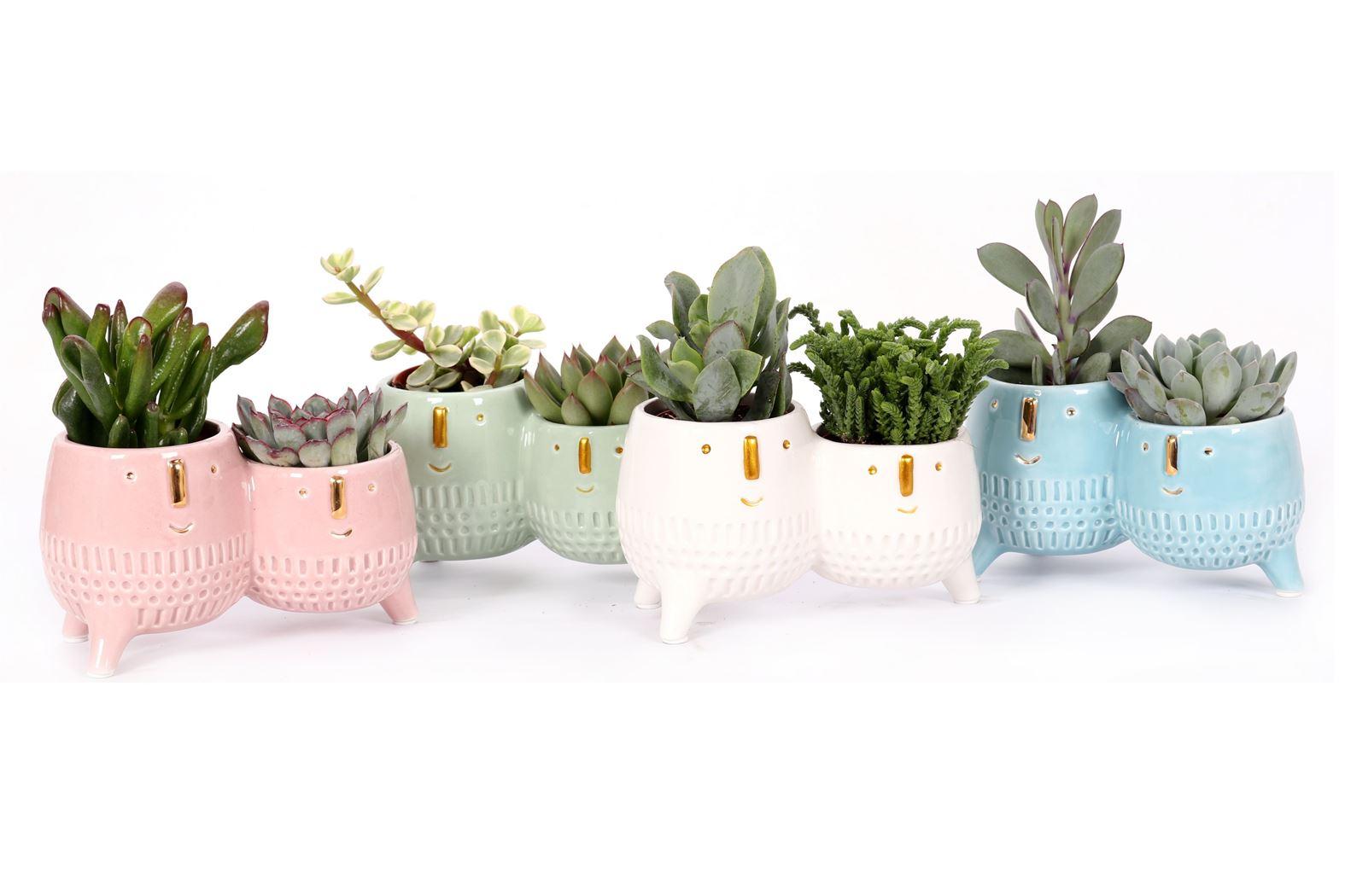 succulenten gemengd in graciosa keramiek