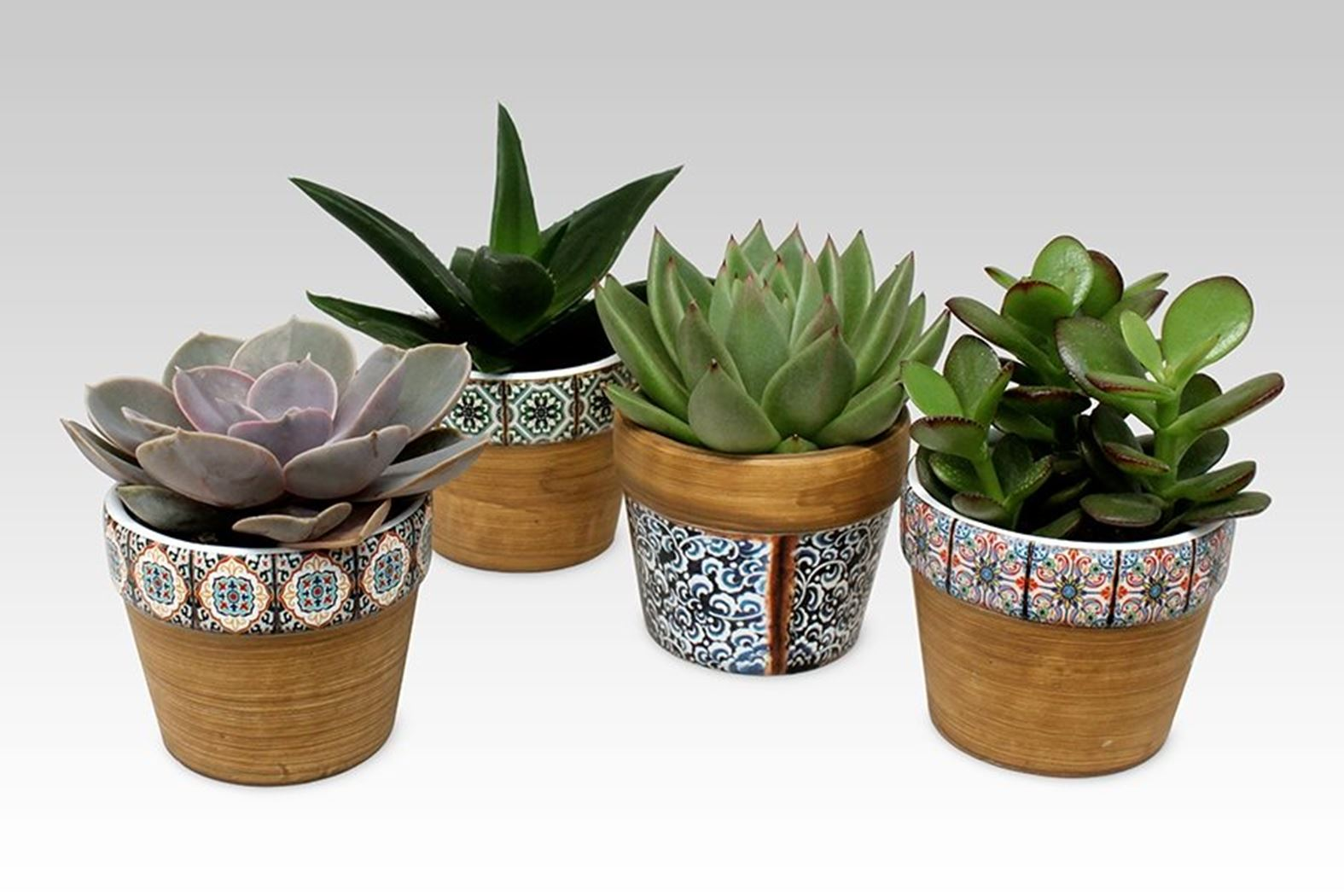 succulenten gemengd in marrakesh ceramic