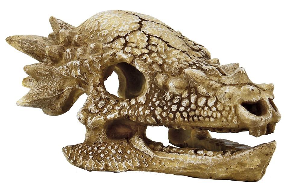 superfish skull t rex m