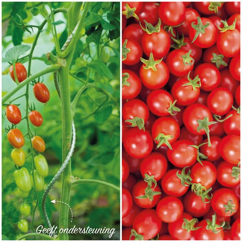 garden world tomatenspiraal gegalvaniseerd