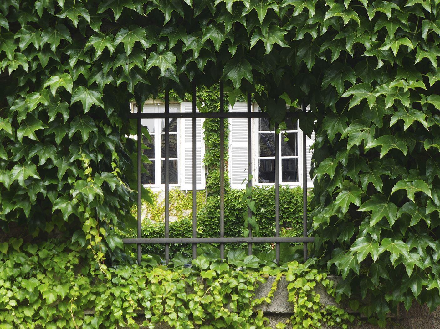 tuinschilderij doorkijk/hedera