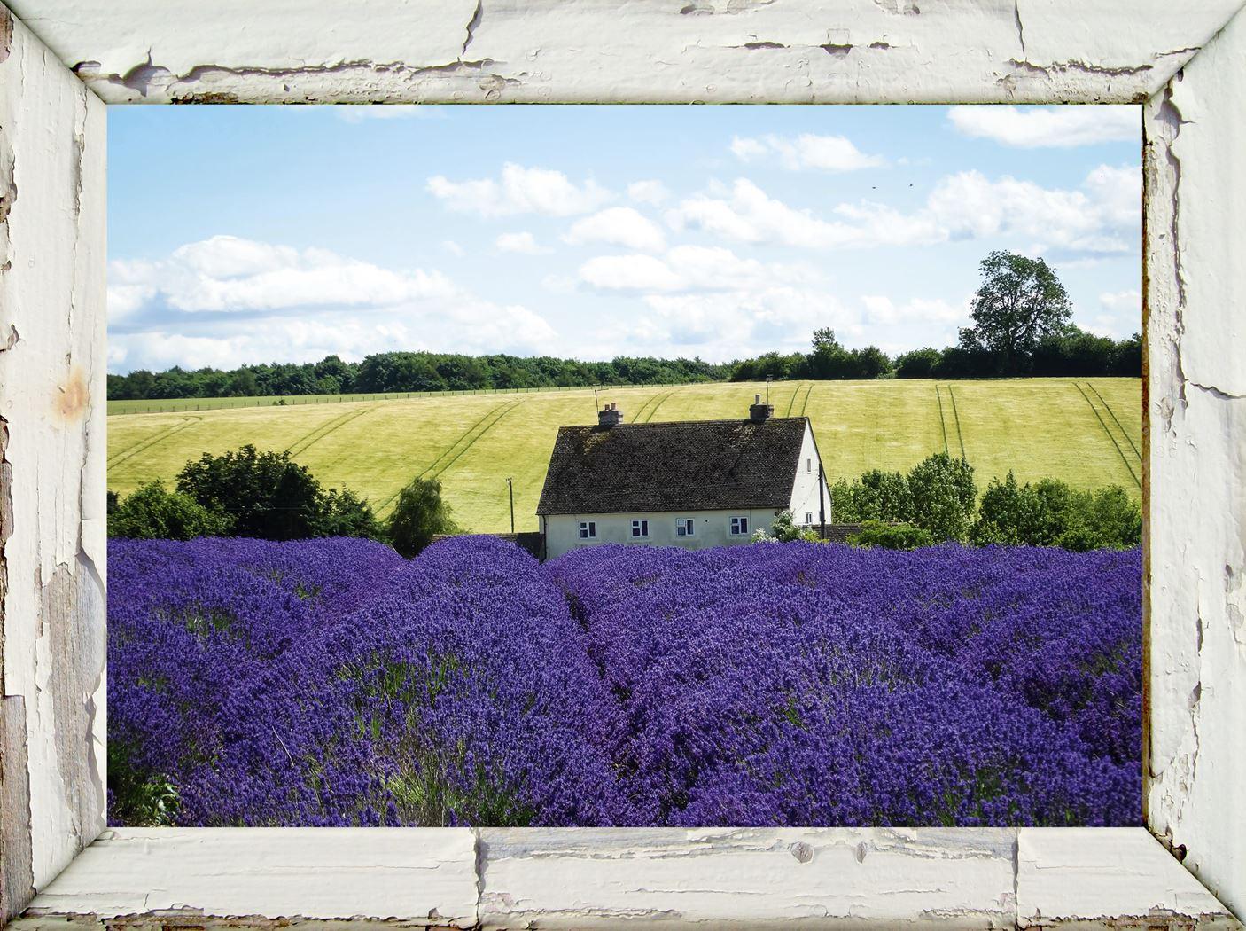 tuinschilderij lijst/lavendelfarm