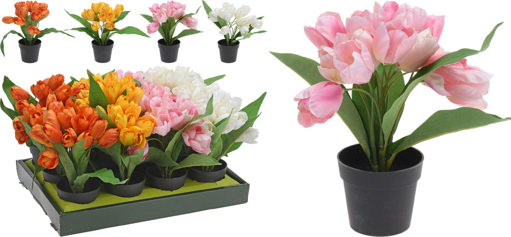 tulpen in pp pot (4 kleuren ass.)