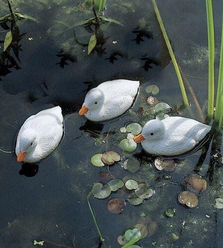 ubbink vijvereend - eendekuiken wit