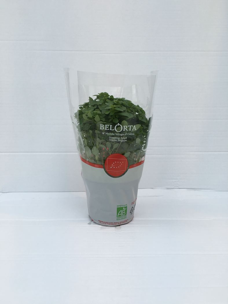 bio basilicum fijnbladig