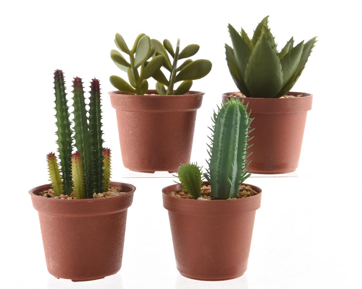vetplant groen plastic pot (4ass.)