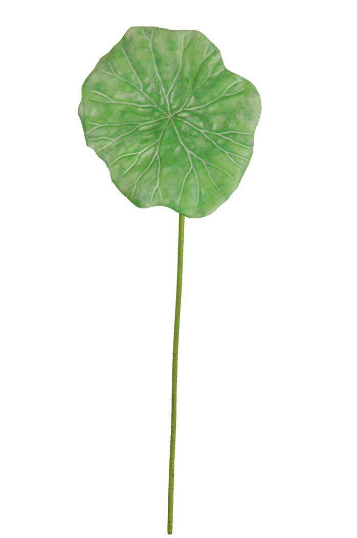 water lily medium leaf green
