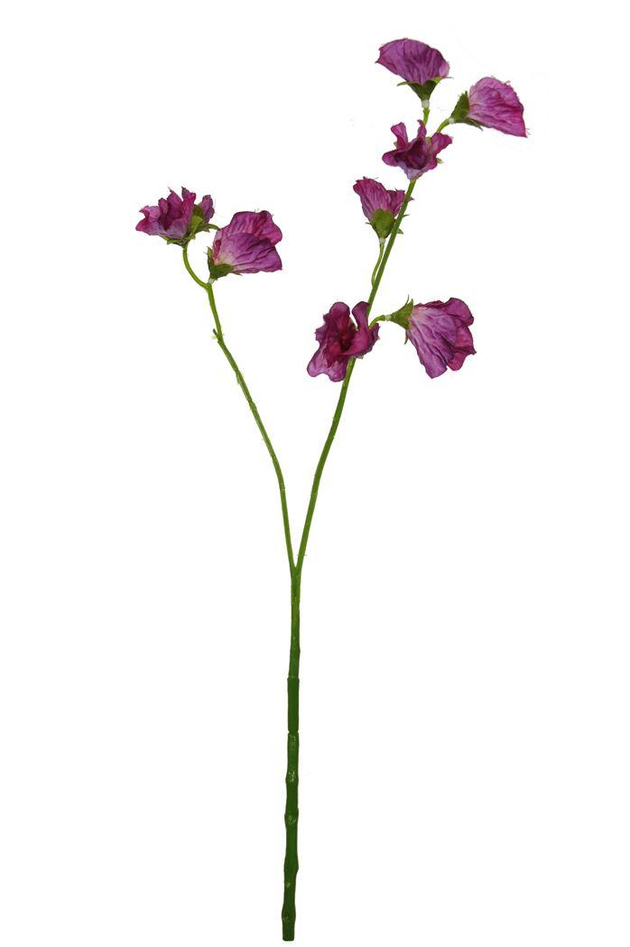 water stem lathyrus x 2 lavender