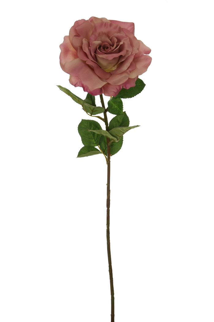 wave single rose mauve