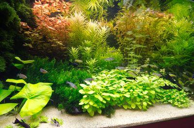 aquariumplant-de-luxe