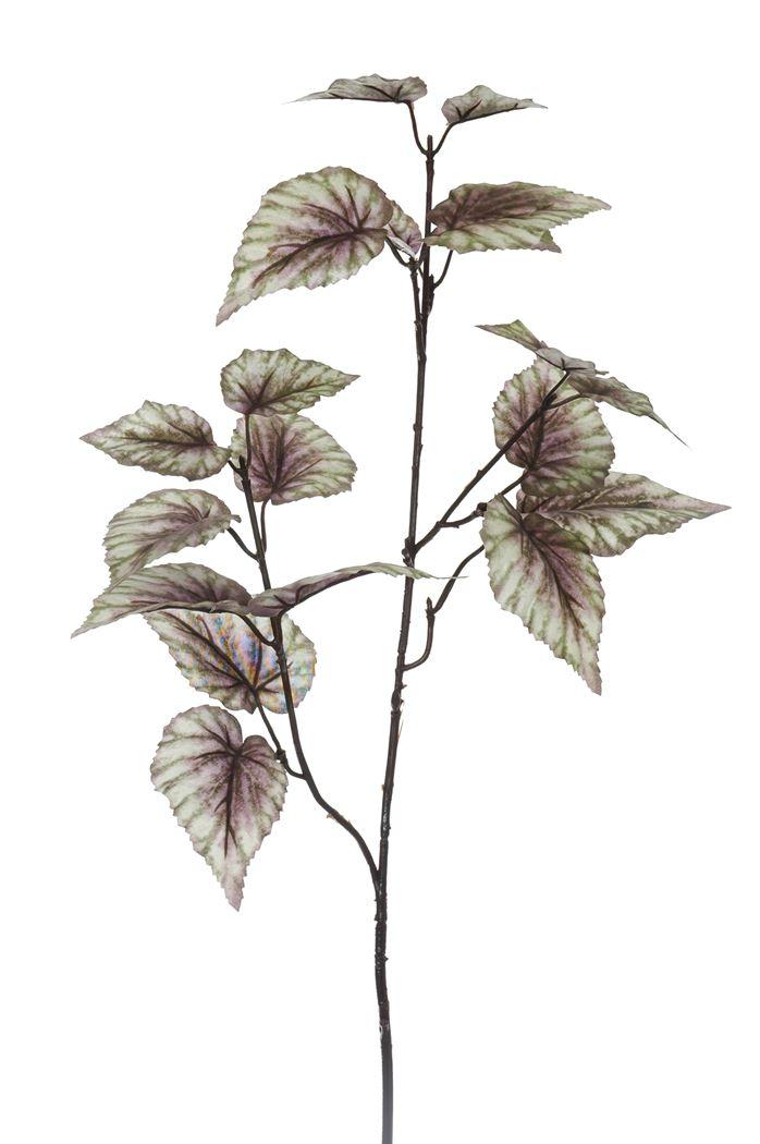 begonia-nleaf-spray-x-2-green-purple