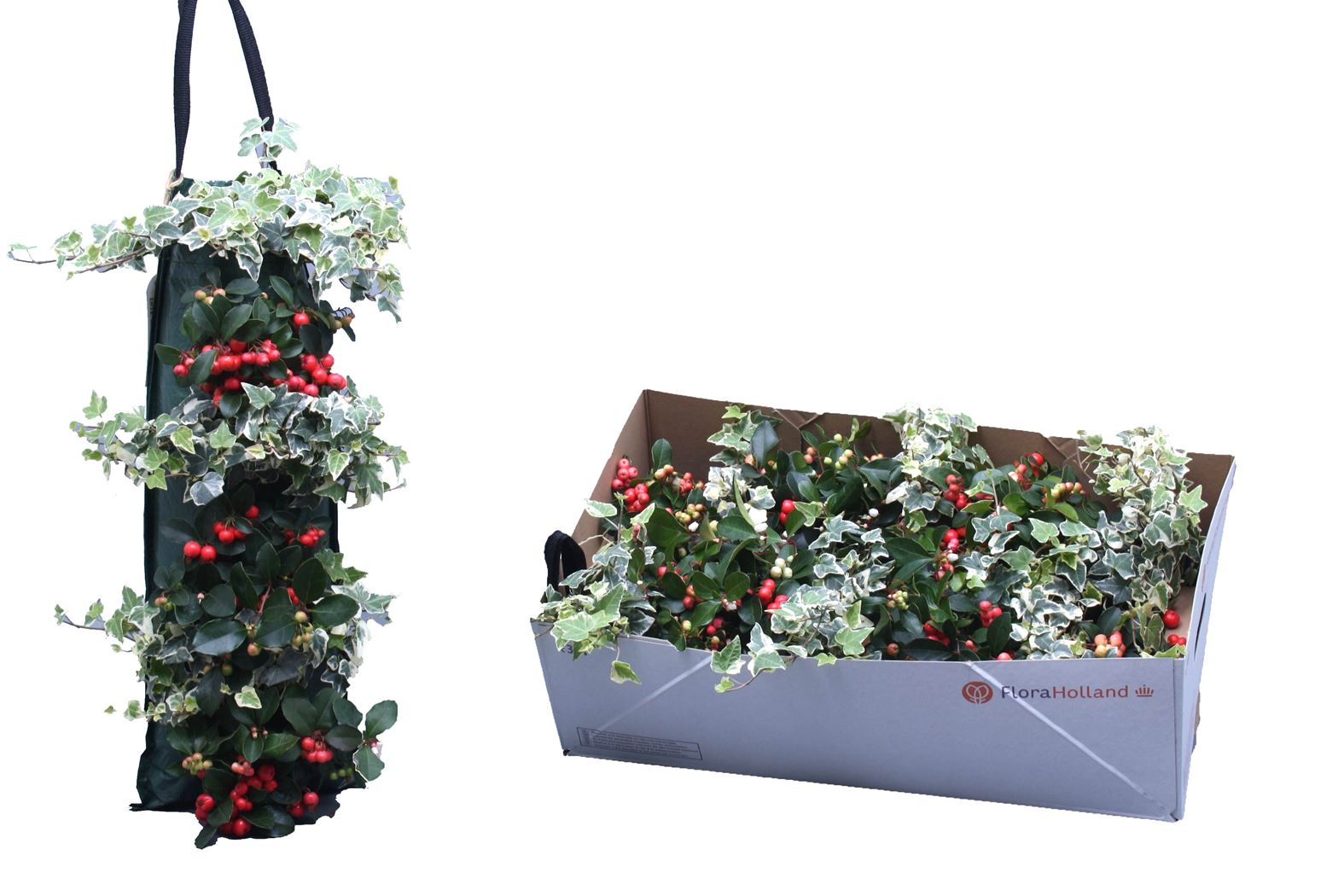 wanderella-gaultheria-met-hedera